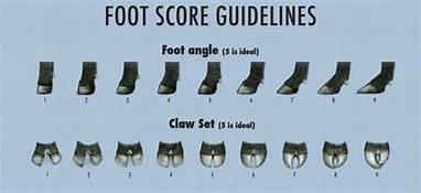 feet scoring.jpg
