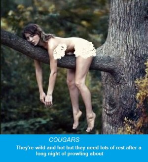 cougars3a.jpg