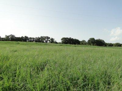 north field.JPG