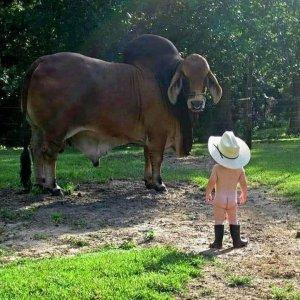bramer bull.jpg