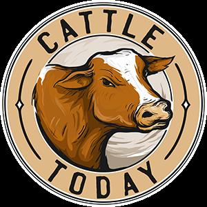 www.cattletoday.com